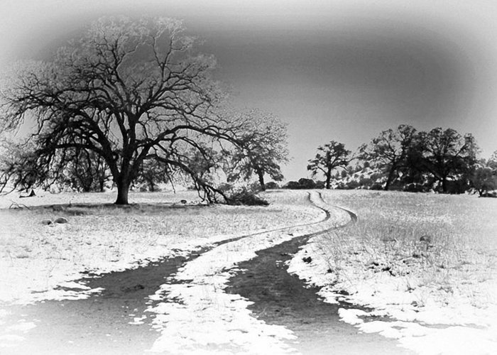 Country Road Greeting Card featuring the photograph Into The Foothills by Floyd Hopper