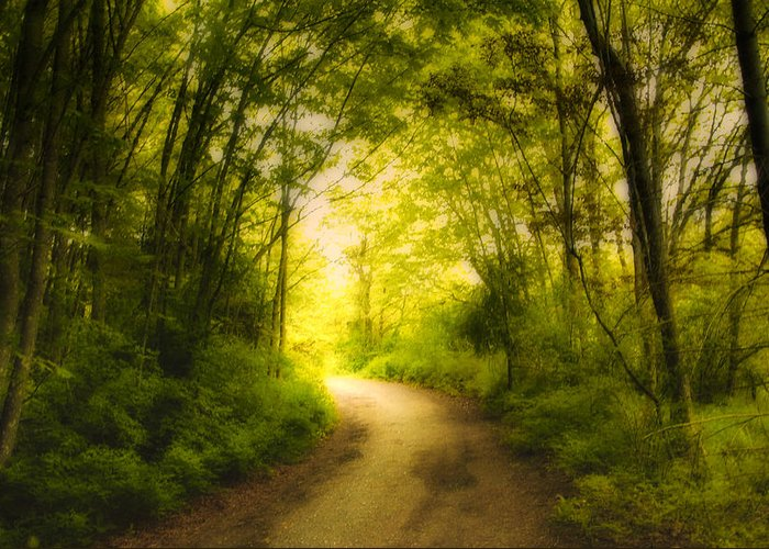 Back Roads Greeting Card featuring the photograph Into The Light by Diane Smith