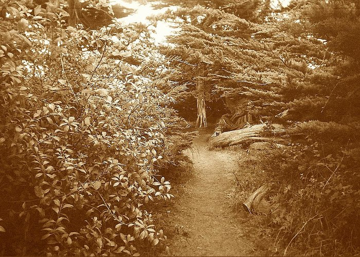 Woodscape Greeting Card featuring the photograph Into The Woods Sepia by Maggie Cruser