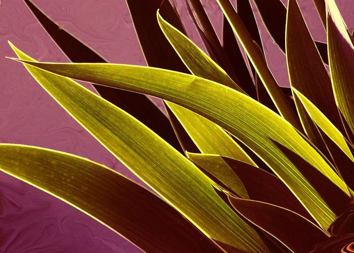 Leaves Greeting Card featuring the photograph Iris Art by Jim Darnall