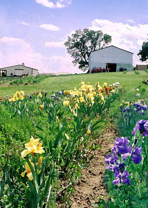 Landscape Painting Greeting Card featuring the photograph Iris Farm by Steve Karol