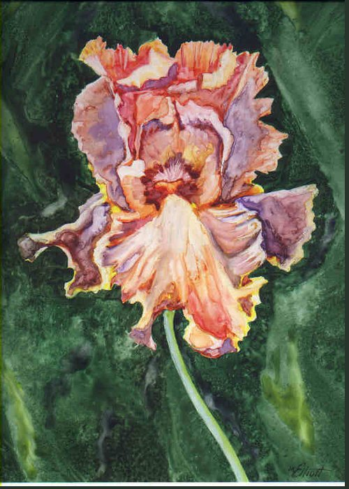 Iris Greeting Card featuring the painting Iris On Yupo by Marsha Elliott