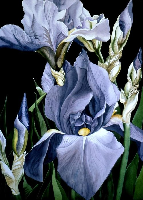 Garden Greeting Card featuring the painting Irises In Blue by Alfred Ng