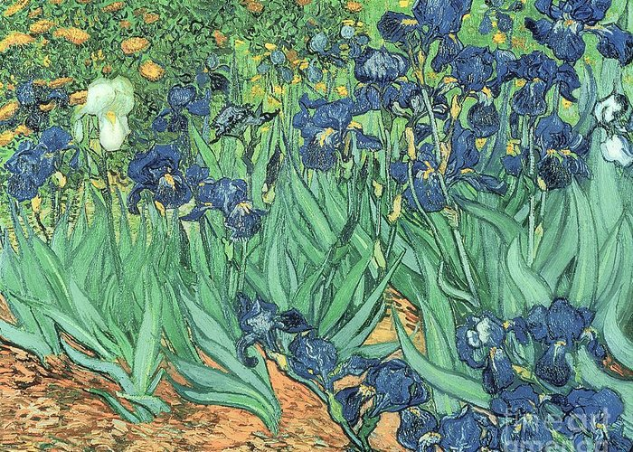 Irises Greeting Card featuring the painting Irises by Vincent Van Gogh
