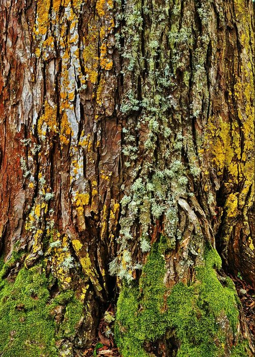 Tree Greeting Card featuring the photograph Island Moss by JAMART Photography