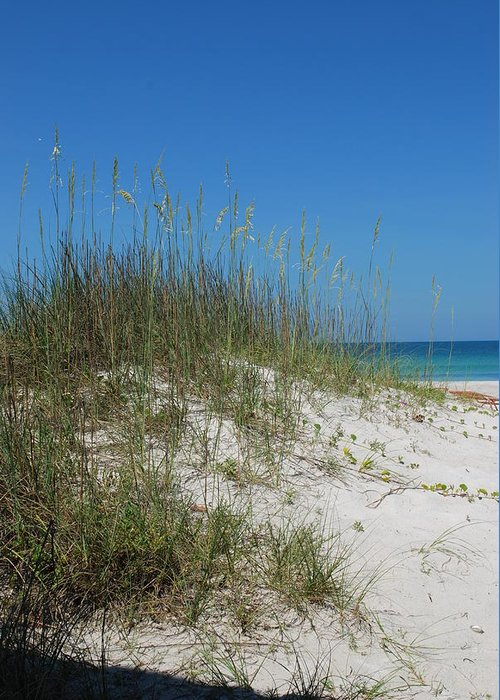 Beach Greeting Card featuring the photograph Island Sea Oats by Lisa Gabrius