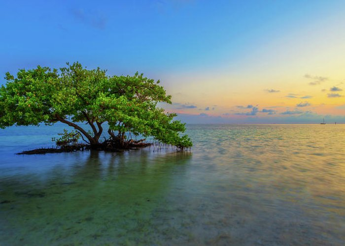 Mangrove Greeting Card featuring the photograph Isolation by Chad Dutson