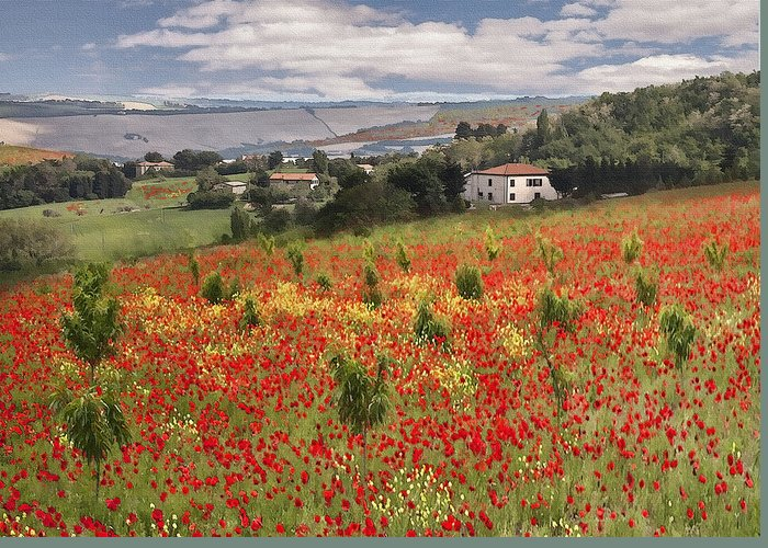 Poppy Greeting Card featuring the photograph Italian Poppy Field by Sharon Foster