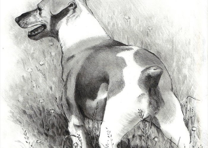 Dog Greeting Card featuring the drawing Jack Russell Terrier by Joyce Geleynse