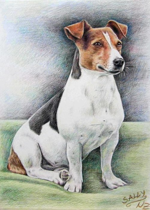 Dog Greeting Card featuring the drawing Jack Russell Terrier by Nicole Zeug
