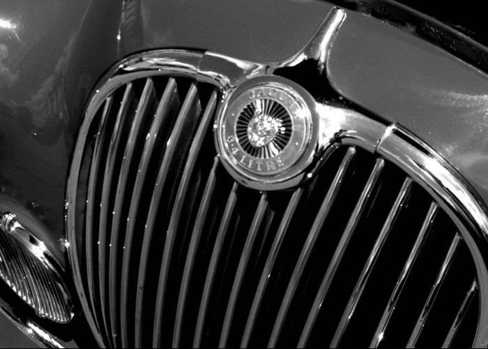 Car Greeting Card featuring the photograph Jaguar by Audrey Venute