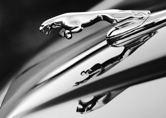 Black And White Greeting Card Featuring The Photograph Jaguar Car Hood  Ornament Black And White By