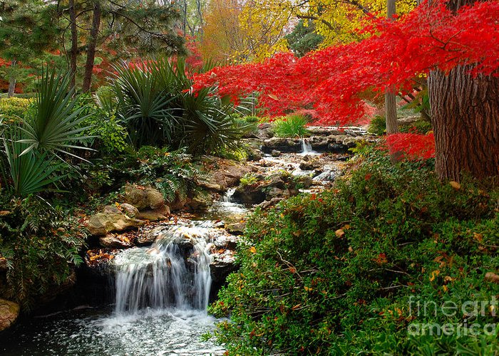 Landscape Greeting Card featuring the photograph Japanese Garden Brook by Jon Holiday
