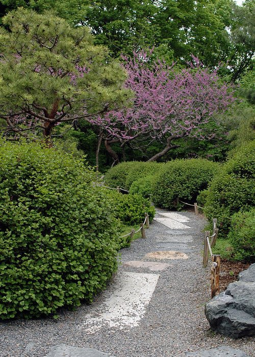 Japanese Garden Greeting Card featuring the photograph Japanese Garden I by Kathy Schumann