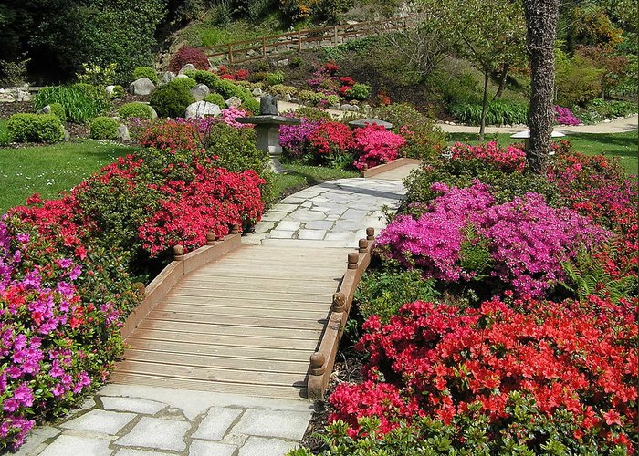 Gardens Greeting Card featuring the photograph Japanese Garden by Jeanette Oberholtzer