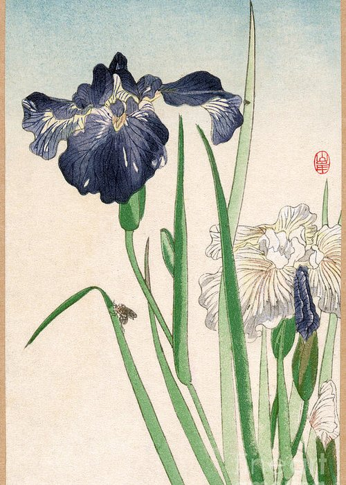 20th Century Greeting Card featuring the photograph Japanese Irises by Granger