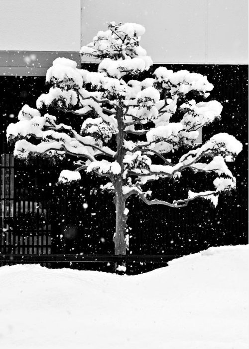 Winter Greeting Card featuring the photograph Japanese Tree In The Snow by Dean Harte