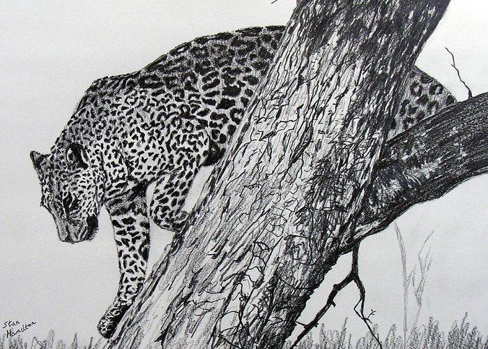 Original Drawing Greeting Card featuring the drawing Jaquar In Tree by Stan Hamilton