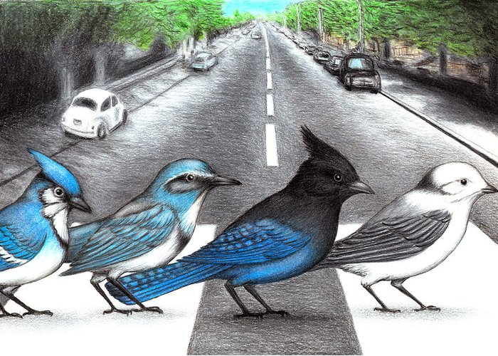 Abby Road Greeting Cards