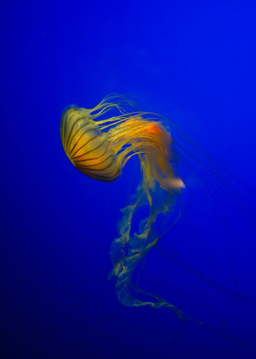 Animal Greeting Card featuring the photograph Jellyfish From The Deep Blue by Nila Newsom