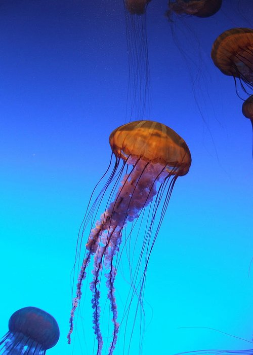 Jellyfish Greeting Card featuring the photograph Jellyfish by Robert Meanor