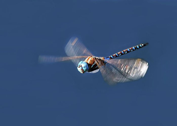 Dragonfly Greeting Card featuring the photograph Jet Blue by Donna Kennedy