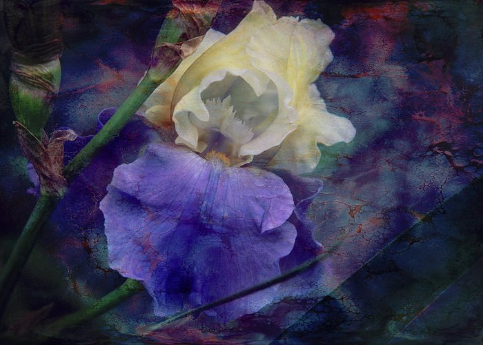 Iris Greeting Card featuring the photograph Jeweled Iris by Toni Hopper