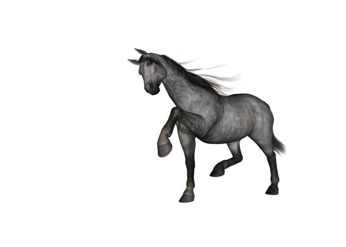 Gray Mare Greeting Cards