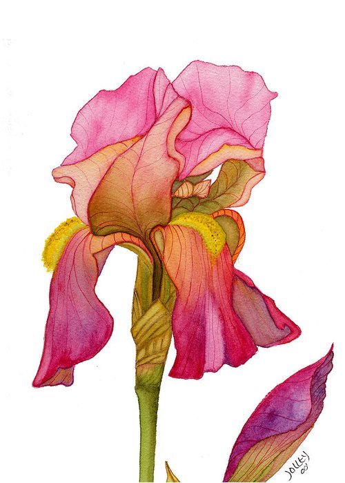 Bearded Iris Greeting Card featuring the painting Jody's Iris by Stephanie Jolley