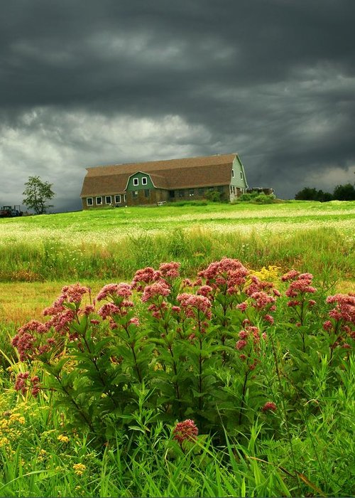 Wildflowers Greeting Card featuring the photograph Joe Pye Weed And Barn by Roger Soule