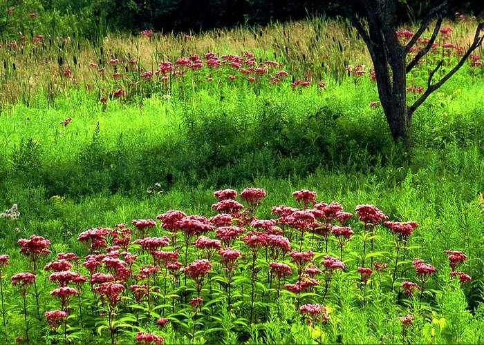 Wildflowers Greeting Card featuring the photograph Joe Pye Weed by Roger Soule