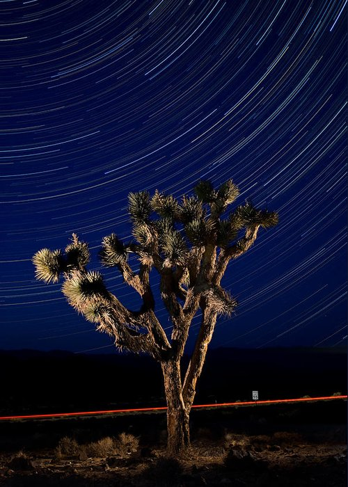 Death Greeting Card featuring the photograph Joshua Tree And Star Trails by Steve Gadomski
