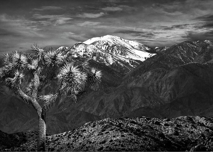California Greeting Card featuring the photograph Joshua Tree At Keys View In Black And White by Randall Nyhof
