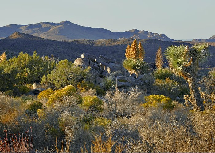 Sunset Greeting Card featuring the photograph Joshua Tree National Park In California by Christine Till