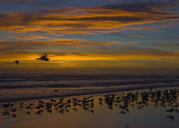 Beach Morning Sunrise Ocean Bird Birds Seagulls Gull Gulls Sand Water Wave Waves Cloud Sky Greeting Card featuring the photograph Joyful Gathering by Andrei Shliakhau
