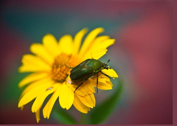 June Greeting Card featuring the photograph June Beetle by Douglas Barnett