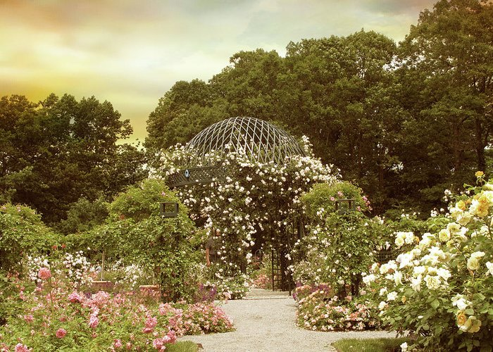 Garden Greeting Card featuring the photograph June Bloom by Jessica Jenney