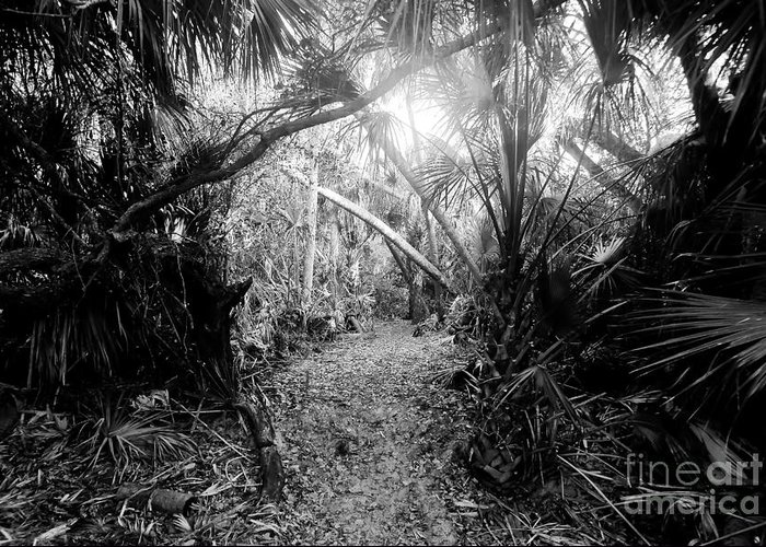 Jungle Greeting Card featuring the photograph Jungle Trail by David Lee Thompson