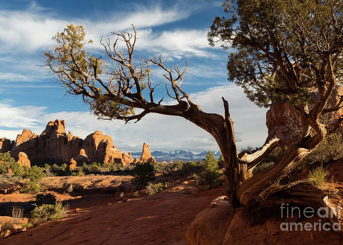 Arches National Park Greeting Card featuring the photograph Juniper Tree And Sandstone Fins by Mike Cavaroc