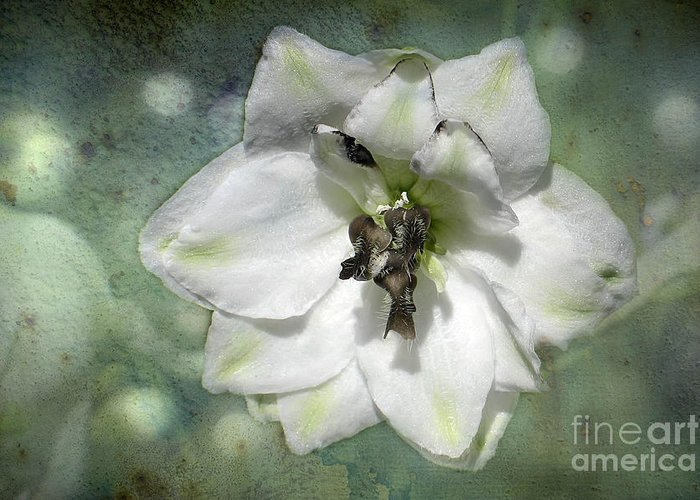 Flower Greeting Card featuring the photograph Just A Flower by Teresa Zieba
