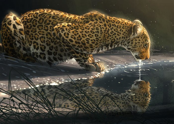 Leopard Greeting Cards