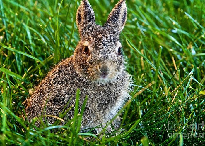 Baby Rabbit Greeting Card featuring the photograph Just Beginning by DJ MacIsaac
