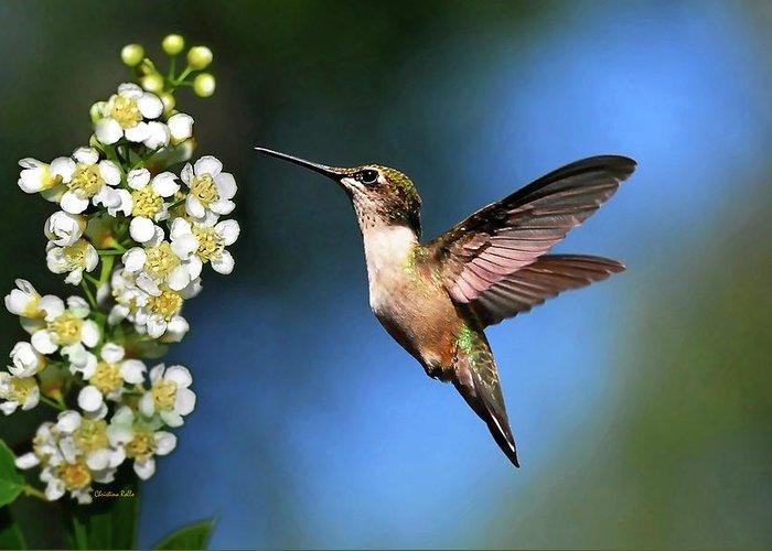 Ruby Throated Hummingbird Art Greeting Cards