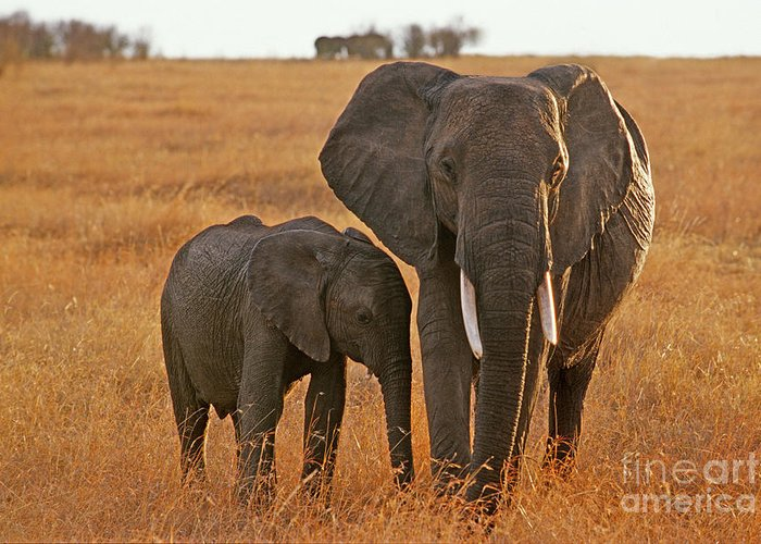 Africa Greeting Card featuring the photograph Just Mom And Me by Sandra Bronstein