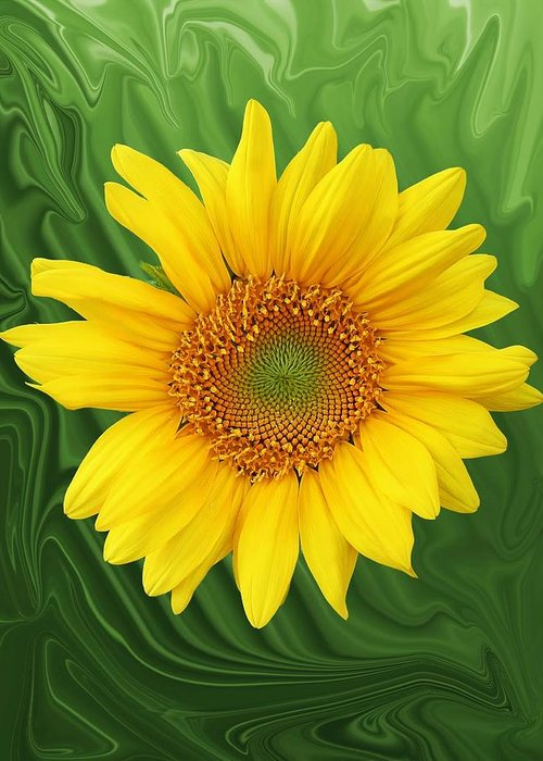 Sunflower Greeting Card featuring the photograph Kansas Sunflower by Jim Darnall