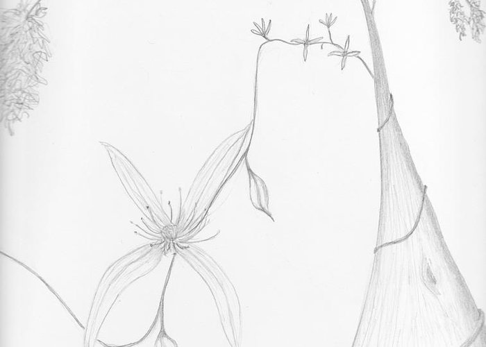Karri Greeting Card featuring the drawing Karri And Climbing Clematis by Leonie Higgins Noone