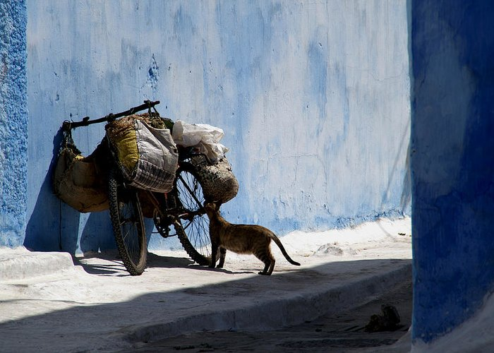Morocco Greeting Card featuring the photograph Kasbah Cat by Peter Verdnik
