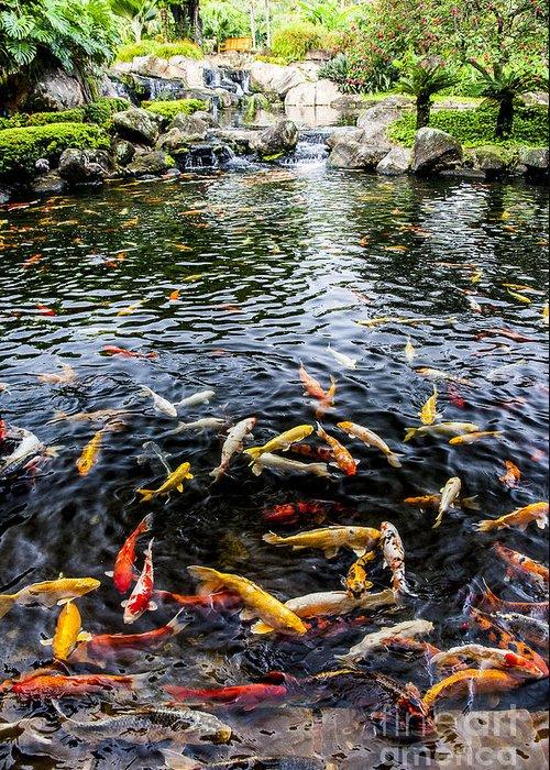 Lake Greeting Card featuring the photograph Kauai Koi Pond by Darcy Michaelchuk