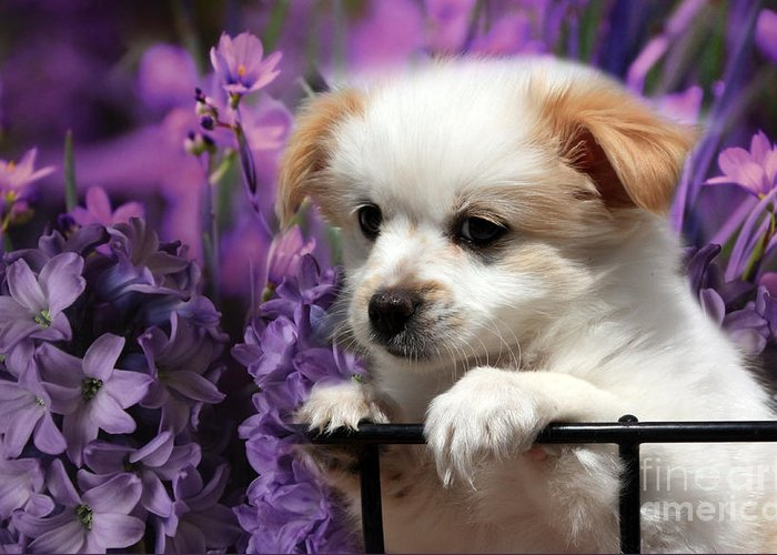 Puppy Greeting Card featuring the photograph Kc In Flowers by Marjorie Imbeau