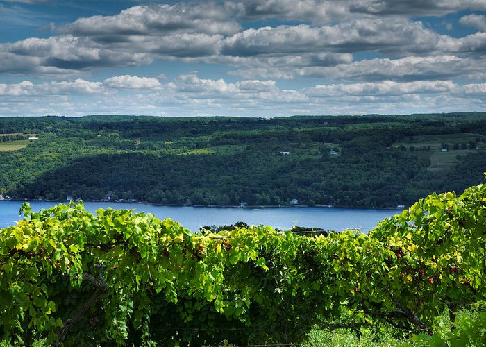 Vines Greeting Card featuring the photograph Keuka Vineyard I by Steven Ainsworth